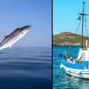 Una caballa gigante salta a la barca de un pescador y lo mata de un golpe en el pecho