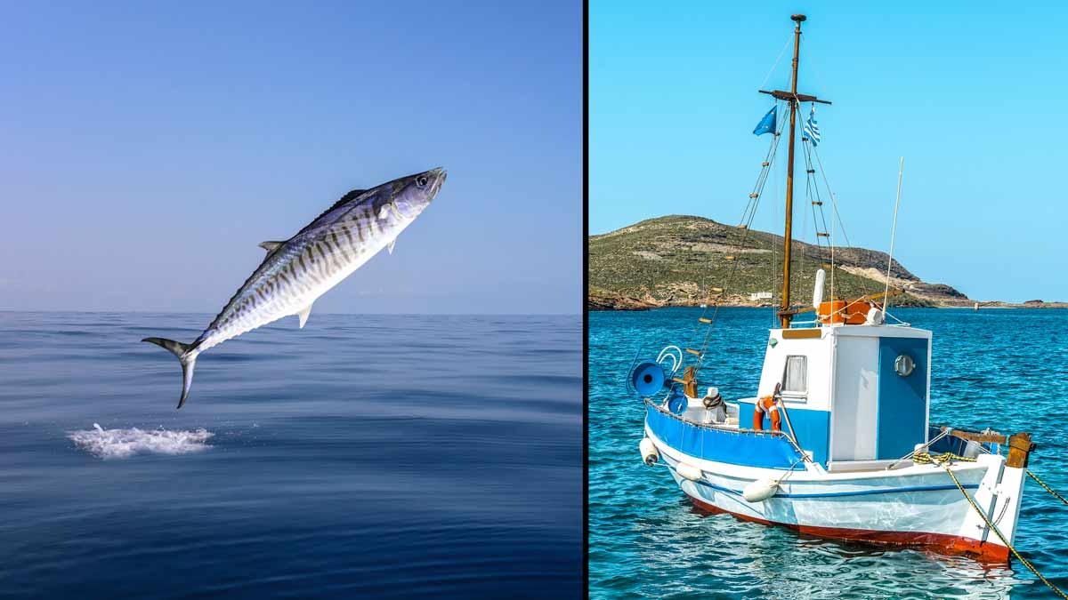 Caballa y barco de pesca. /Shutterstock