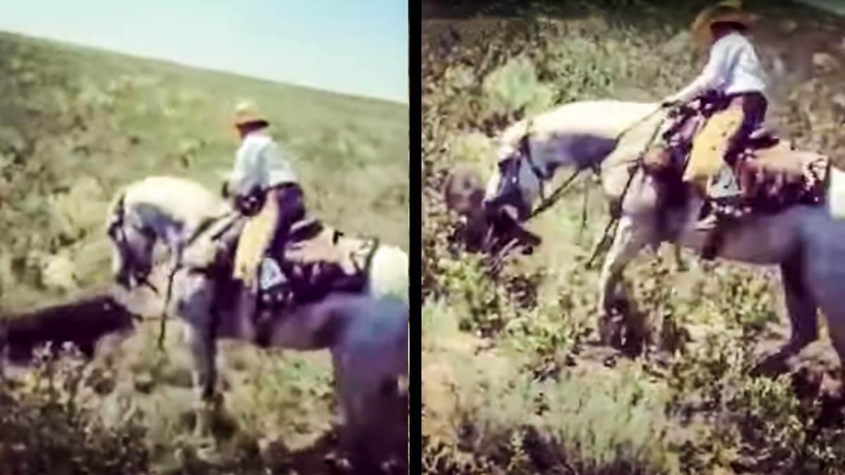 Un caballo muerde a un jabalí que intentaba atacarle y lo hace huir