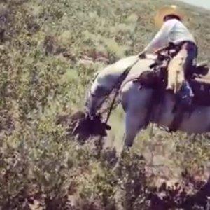 Un caballo muerde a un jabalí y las imágenes se vuelven virales