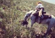 caballo muerde jabali