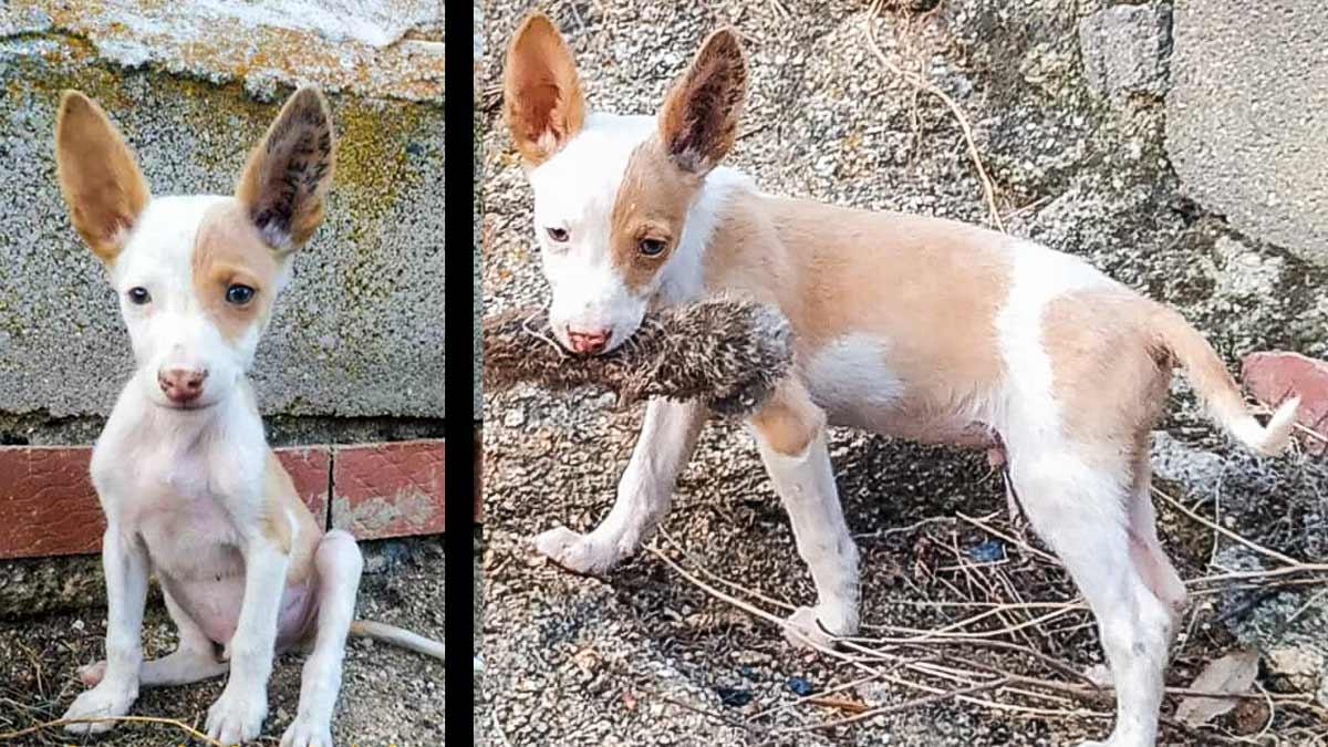 Roban este cachorro a un cazador, que hace un llamamiento desesperado para recuperarlo