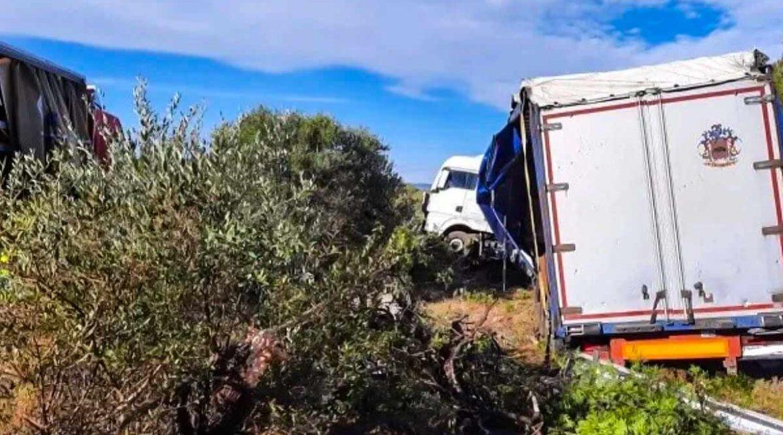 Un camión choca contra un jabalí y se sale de la carretera en Tarragona