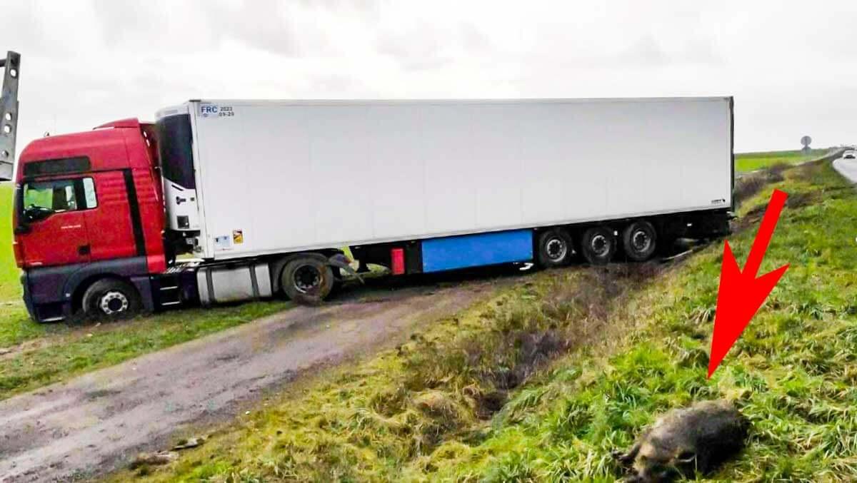 camion-siembra-jabali