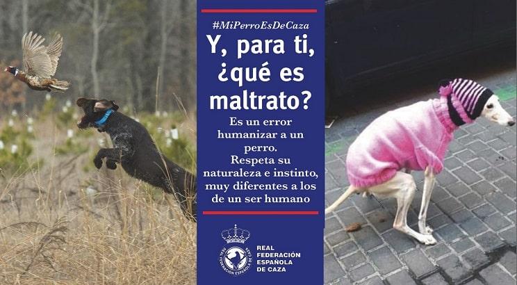 'Y, para ti, ¿qué es maltrato?', la nueva campaña de la RFEC