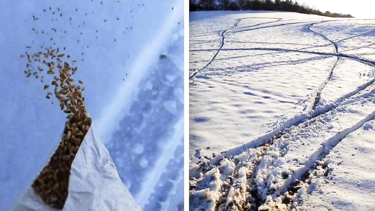 Un cazador va a dar comida a la fauna salvaje por la nevada y se encuentra su coto destrozado por motos