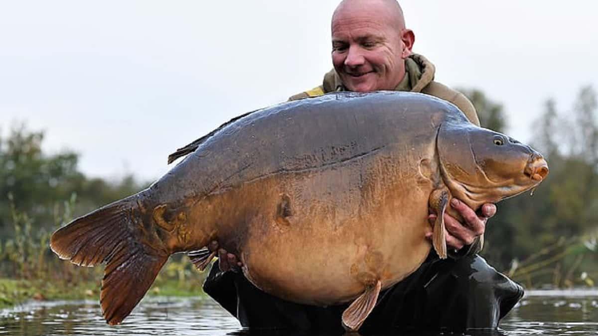 Pesca una carpa récord de 34 kilos pero se niega a registrarla por esta razón