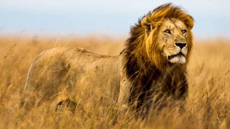 caza africa