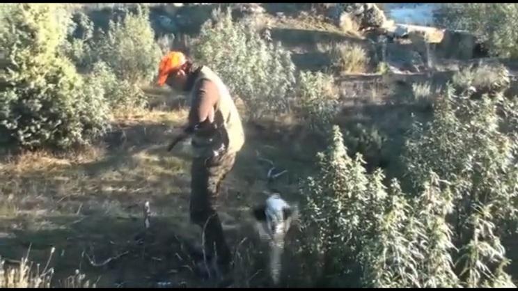 caza becada