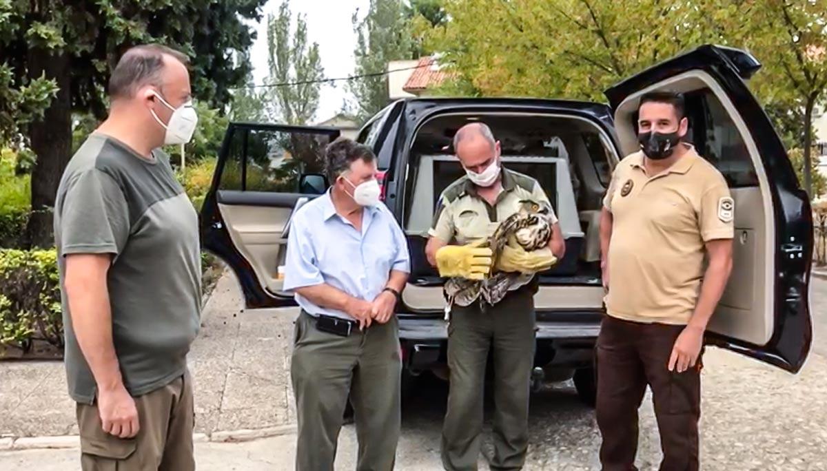 Este vídeo demuestra (una vez más) por qué la caza ayuda a las especies protegidas
