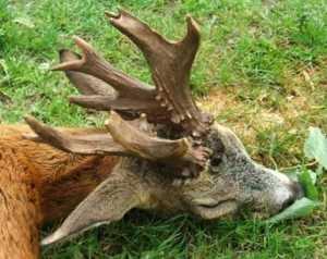 caza con amigos 1