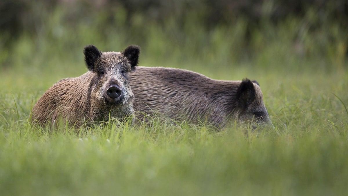 """La RFEC pide al Gobierno que declare la caza """"actividad esencial"""" si llega un nuevo Estado de Alarma"""