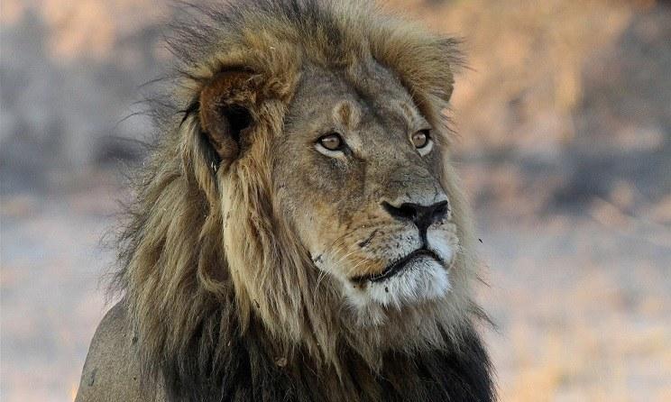 León Cecil años antes de ser cazado. / AP