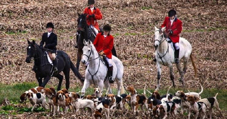Un juez prohíbe a animalistas entrar a fincas para sabotear cacerías en Reino Unido