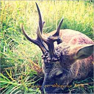 caza en abierto1