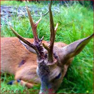 caza en abierto2