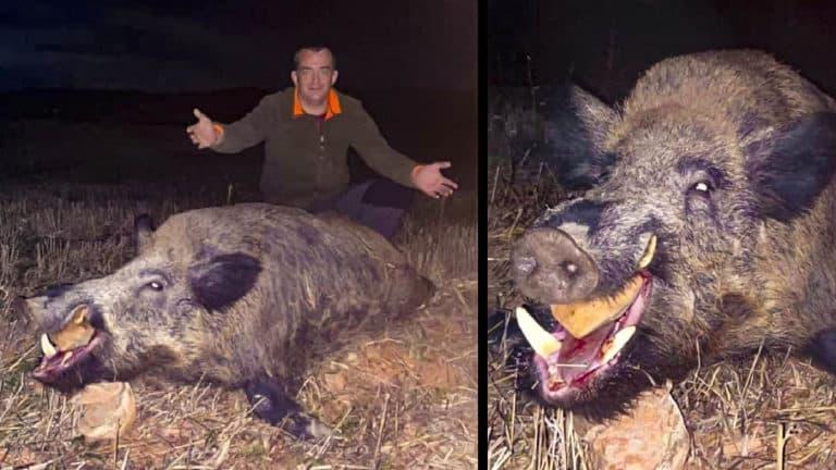 caza jabali 158 kilos espera aguardo_1