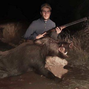 Caza un jabalí de 103 kilos con una superpuesta del 12 tras un mes de aguardos