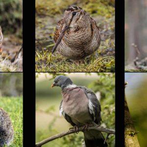 Diez escopetas para cazar todo (perdiz, conejo, zorzal, becada, paloma, jabalí...)