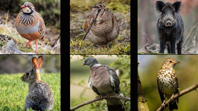 Diferentes especies de caza menor