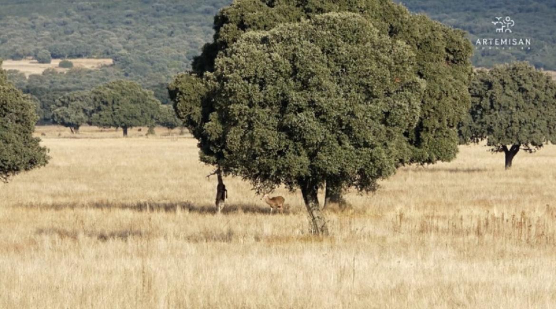 Piden que se prorrogue el fin de la caza en Parques Nacionales