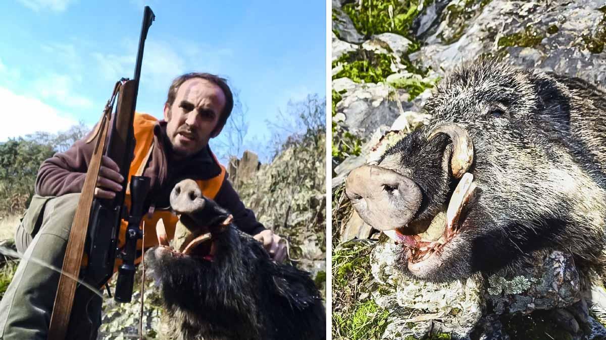 El puesto del siglo: caza ocho jabalíes, uno de ellos con estos impresionantes colmillos