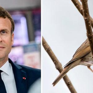 Francia prohíbe la caza de pájaros con liga tras un nuevo golpe de Europa a la cultura rural