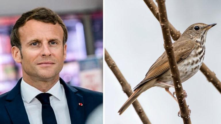 Emmanuel Macron y zorzal. /Shutterstock