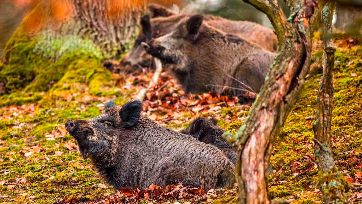 Acabar con la caza en los Parques Nacionales costaría 320 millones de euros a los españoles en plena crisis