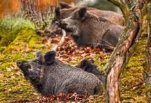 caza parques nacionales