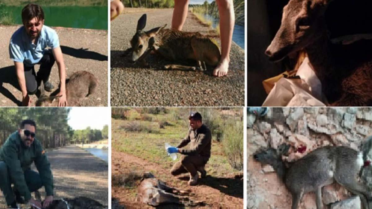 Un cazador recopila en un vídeo todos los animales… que ha salvado de morir