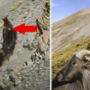Un cazador acierta con arco a su presa a 120 metros ¡y corriendo!