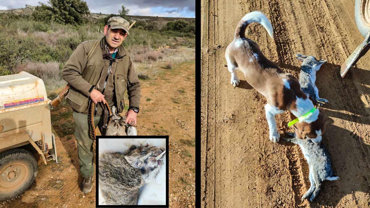 Caza a un conejo con una inusual dentadura en Zamora: «No he visto nada igual en mi vida»
