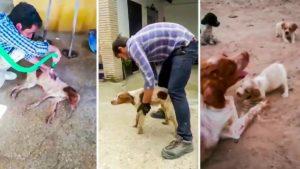 La perra de este 'cazador coraje' enferma, pierde la movilidad y le piden que la sacrifique, pero él hace esto