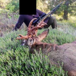 Otro corzo de infarto sacude a los cazadores en pleno estado de alarma