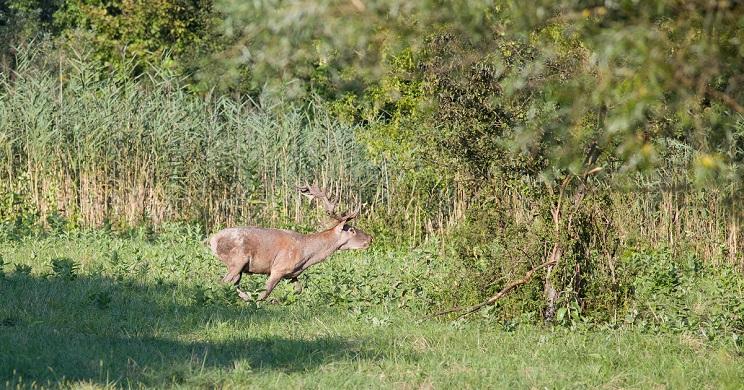 cazador denuncia a fotografo