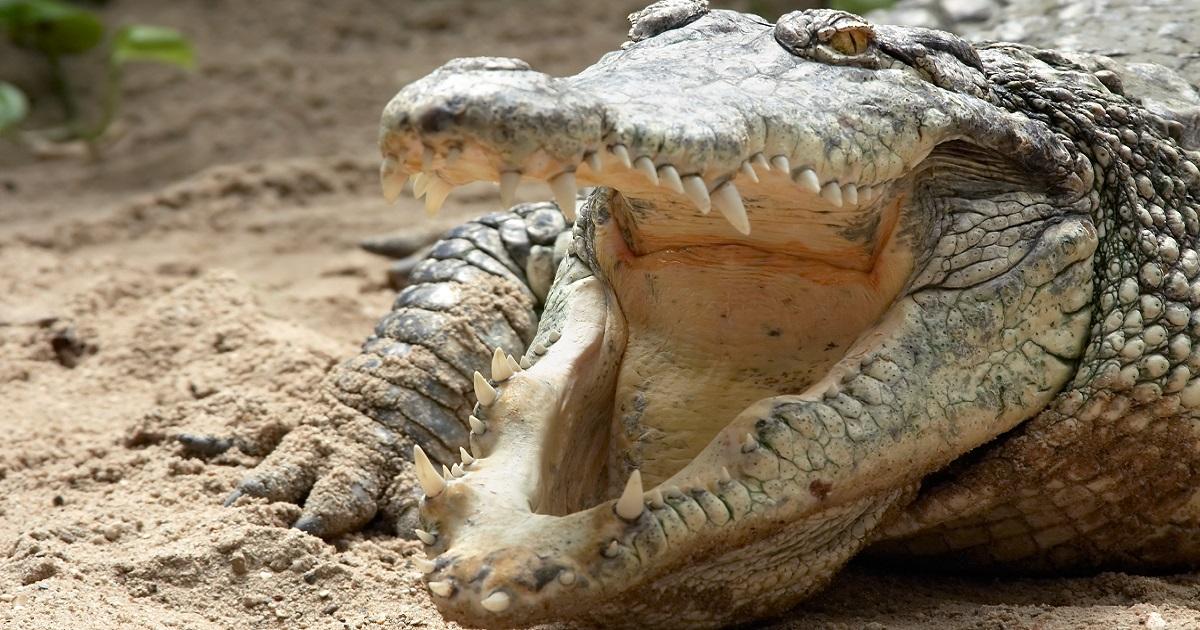 Un cazador desaparecido podría haber sido devorado por cocodrilos
