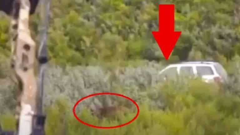 cazador dispara coche