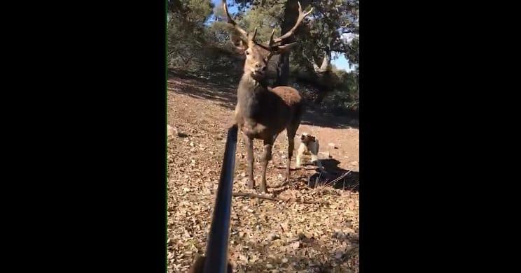 cazador espanta ciervo con el rifle