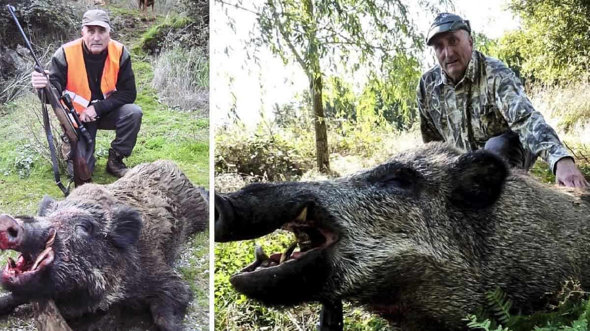 Cazando jabalíes 'vakamulos' a los 80 años: la envidiable lección de afición de este veterano cazador