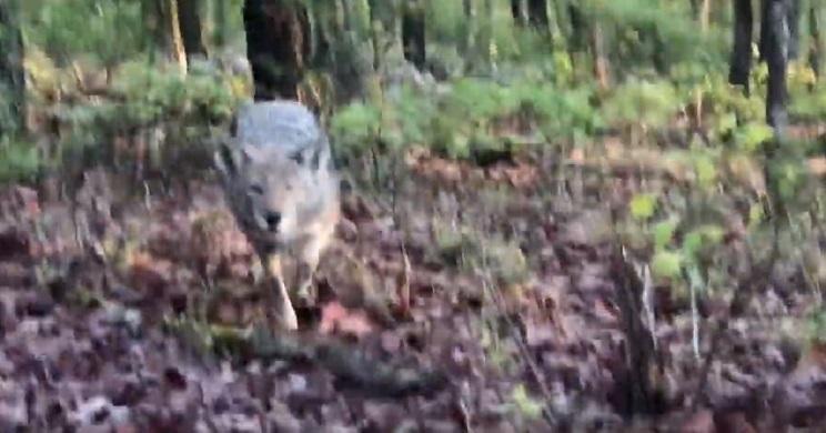 cazador hace la chilla y mira lo que salta