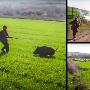 Peligroso lance a un jabalí: esto es lo que un cazador jamás debe hacer