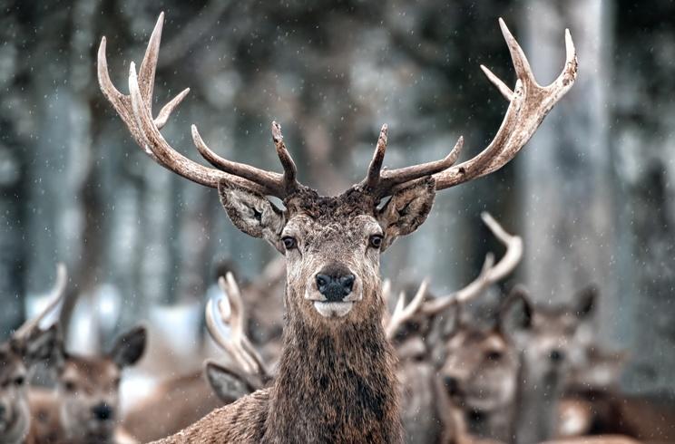cazador muere corneado