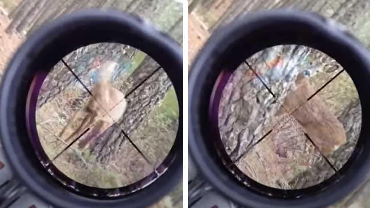 cazador no dispara a corzo