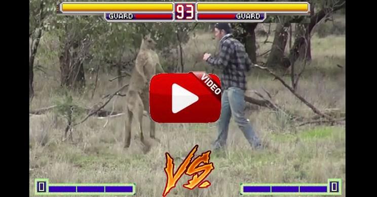 Un cazador pelea con un canguro para salvar la vida de su perro