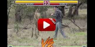 cazador-pelea-canguro