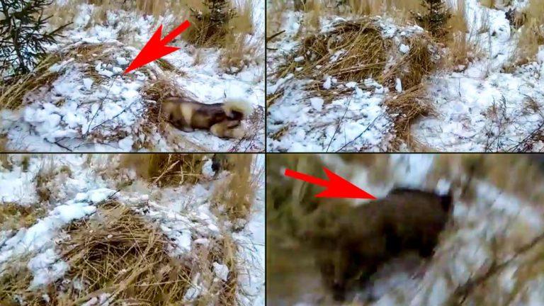 Varias imágenes del momento en el que el perro del cazador ladra al montón de paja.