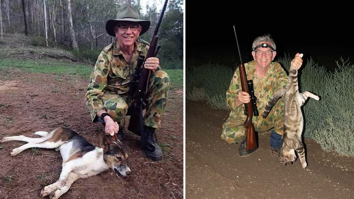 cazador perro