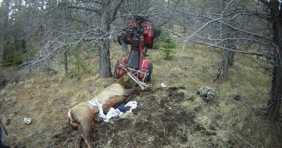 Un cazador es empalado por el ciervo que acababa de abatir