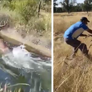 Un cazador y su hijo salvan a un ciervo de morir ahogado en un canal
